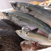 秋も深まり、魚が美味しい季節がやってきました!!下田商店&下田寿司